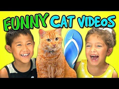 Kids React Bonus - Funny Cat Videos - YouTube Funny Cat Videos Episodes