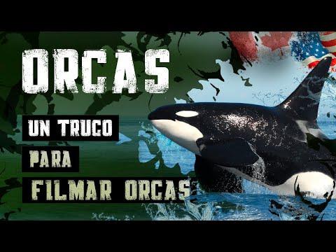 Un truco para filmar orcas EDUCACIÓN AMBIENTAL