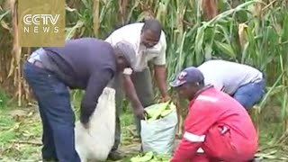 Zimbabwean migrants build profitable farm business in South Africa