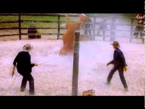 TODOS LOS CABALLOS BELLOS: ALL THE PRETTY HORSES