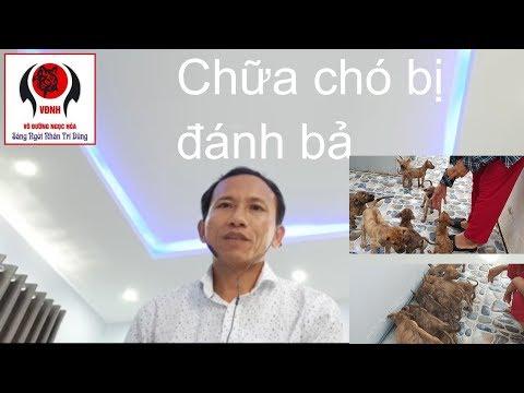 Cách Để Cứu Chó Khi Bị Đánh Bả Phần 1 | Nguyễn Viết Hòa