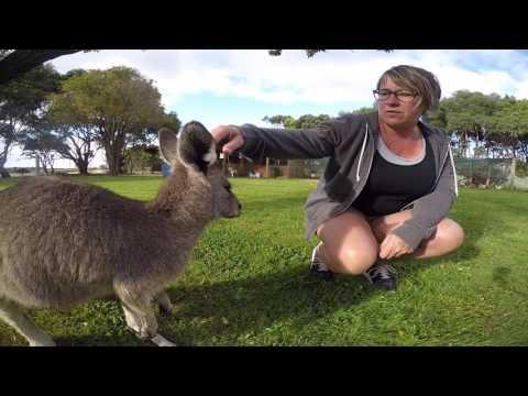 Voyage à Melbourne et sur la Great Ocean Road en famille - Little Trip Sunshine