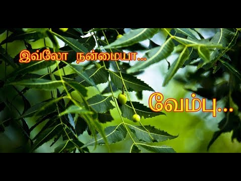 Neem Tree    நன்மைகள்    Tamil    from YouTube · Duration:  5 minutes 10 seconds