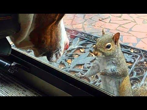Ogni Giorno Uno Scoiattolo Bussava Alla finestra, 8 Anni Dopo, La Famiglia Realizza Ciò Che...