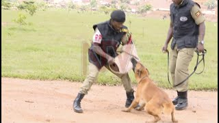How police uses dogs to beat criminals