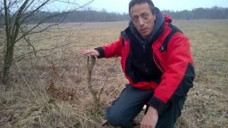 Yamadori Bonsai gestalten ausgraben oder doch stehen lassen ???( Eiche,Birke & Eibe)