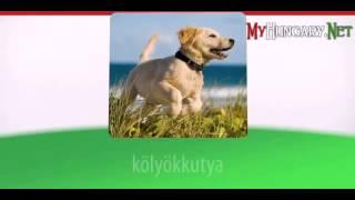 Видео уроки венгерского языка в картинках. Тема - Топ-20 венгерских Глаголов. Часть 1