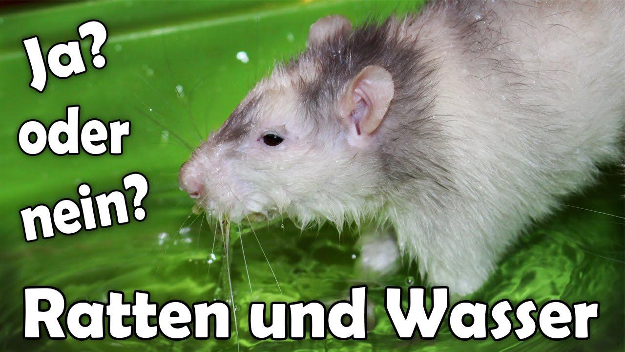 Ratten Baden