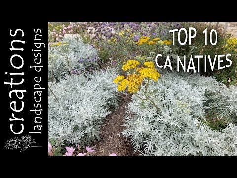 Top 10 California Native Plants
