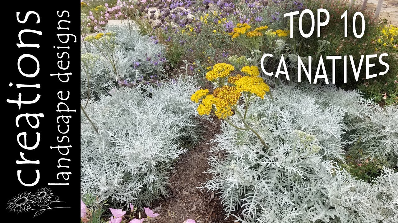 Top 10 California Native Plants. Creations Landscape Designs