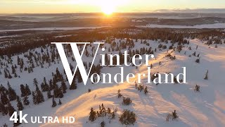 Winter Wonderland in 4K Spectacular Relaxation film With Calming Music for Stress Relief