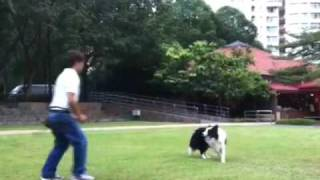 Sunny Chong Canine Dancing - Heeling With Music