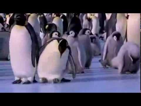Những cú ngã của chim cánh cụt