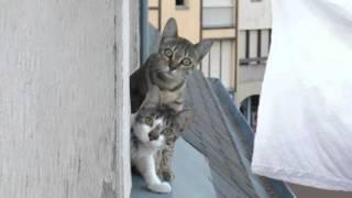 Коты мартовские С 8 Марта, девушки-красавицы!