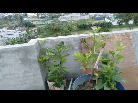 Vegetables on the roof idea - YouTube