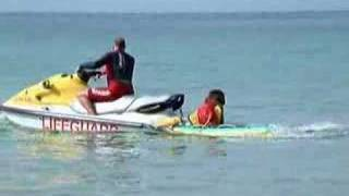 Bilbo The Lifeguard Dog - Sennen Cove