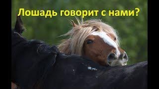 Как научиться понимать лошадей...