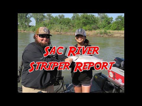 Sacramento River Striper Action & Report!