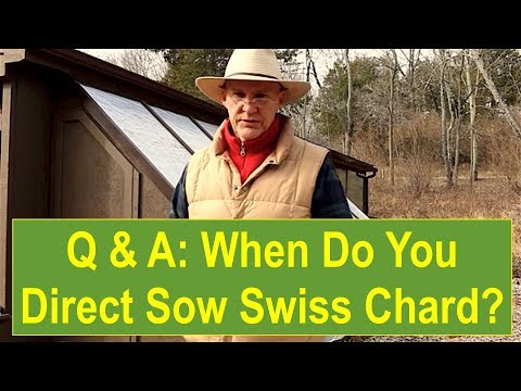 """When Do You Direct Sow Your Swiss Chard?"""