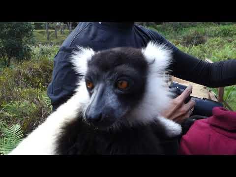 Lemur Park Andasibe Madagascar, 10 6 2019