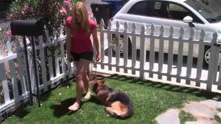 The Good Dog Minute 5/21/13:aggression And Severe Leash Reactivity Replaced W/ Calm Obedience!