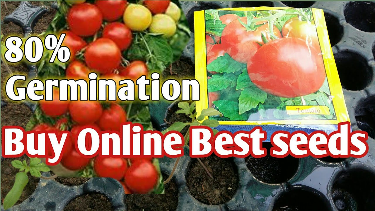Download Buy Best Tomato seeds    टमाटर के सबसे सस्ते बीज खरीदें    Home garden