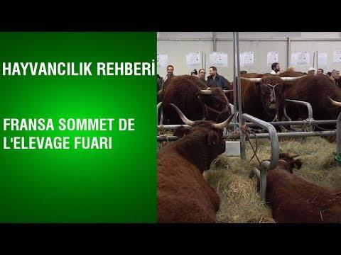 Hayvancılık Rehberi
