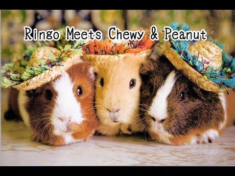 Ringo Meets Chewy & Peanut - Children's Bedtime Story/Meditation