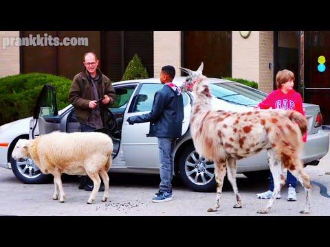 Service Animal Prank on Uber | Comedy