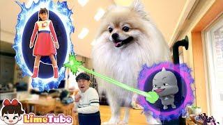 뽀뽀가 커졌어요! 슈퍼라임 어드벤쳐 | 서천 국립생태원 모험 놀이터에서 블럭 방탈출 LimeTube toy review