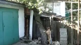 Собака на крыше. Погоня за котом.