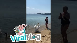 Swan Scares Lady into the Sea || ViralHog