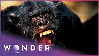 Woman Is Viciously Attacked By Dangerous Tiger Human Prey S1 EP1 Wonder