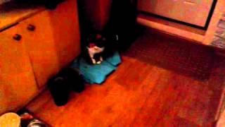 Кошке 19 лет