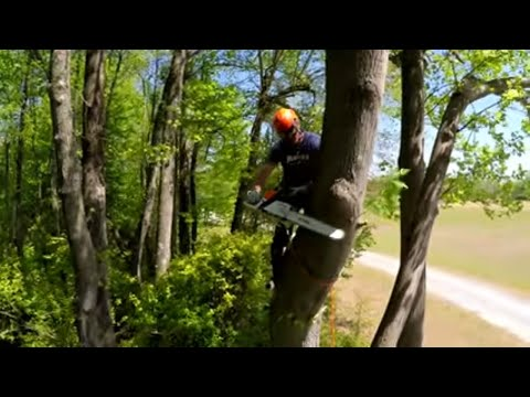 How to Top a Tree That's Too Tall to Drop
