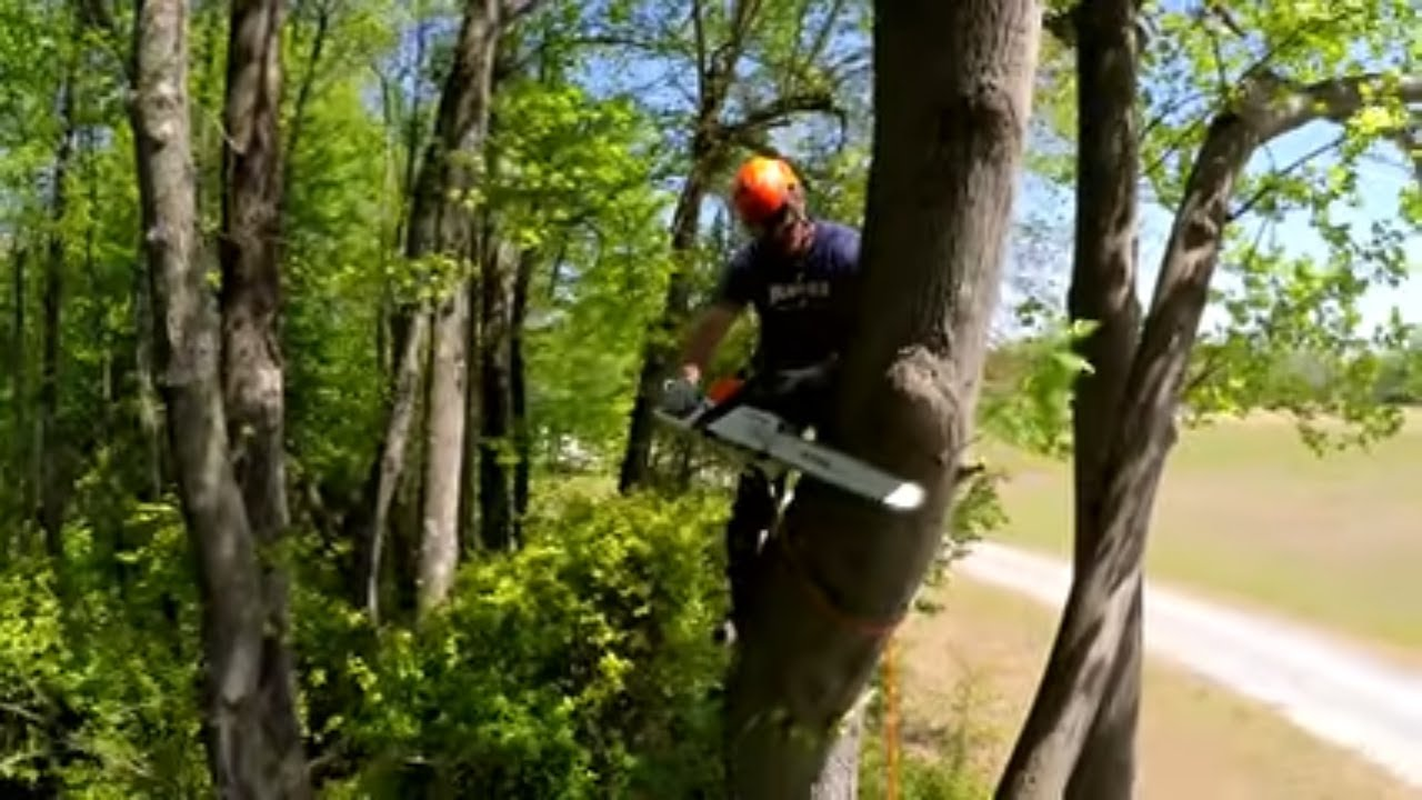 How To Top A Tree Thats Too Tall To Drop