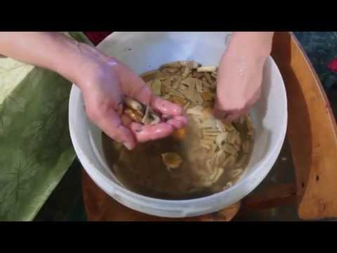 грибы вешенки с плесенью как их обрабатывать