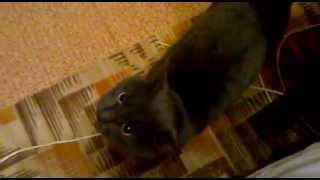 Учим Кота английскому языку!) Первые шаги! ) Learn English cat!) The first steps! )