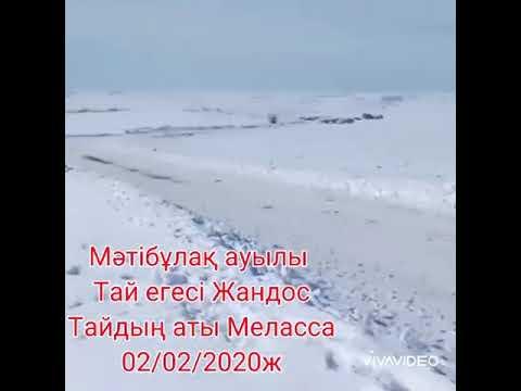 Меласса 02/02/2020ж Сұлутөр ауылы