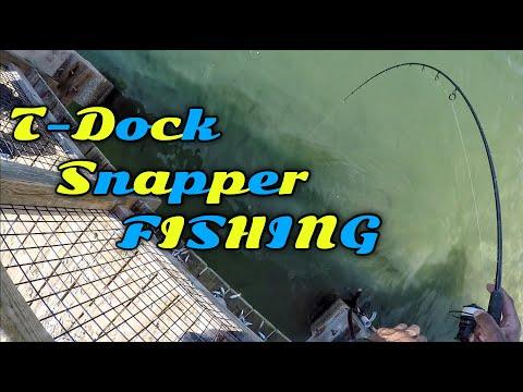 Mangrove Snapper Fishing