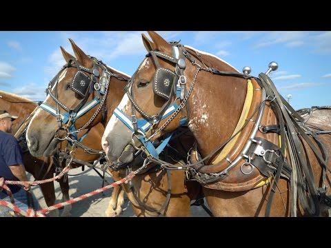 Draft Horse Pull 2016 in 4k UHD