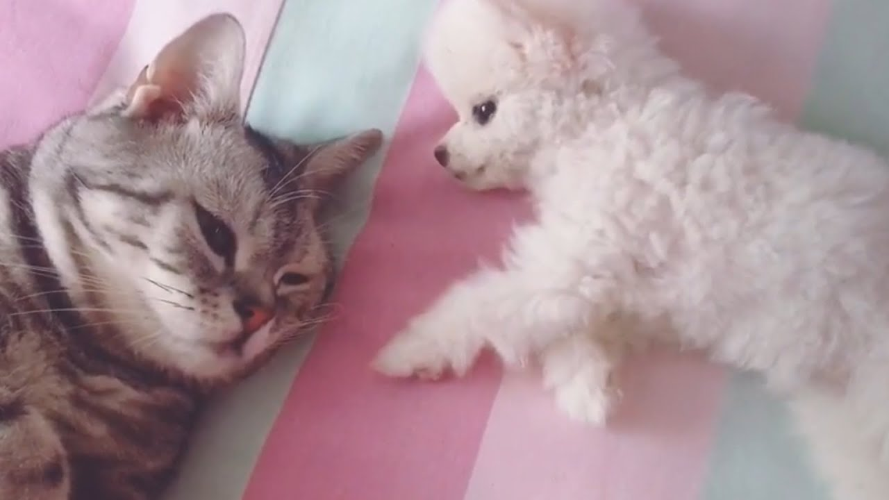 🐶😺Cute Funny Lovely Cats With Dogs - Animals Video 2020 | Pets House