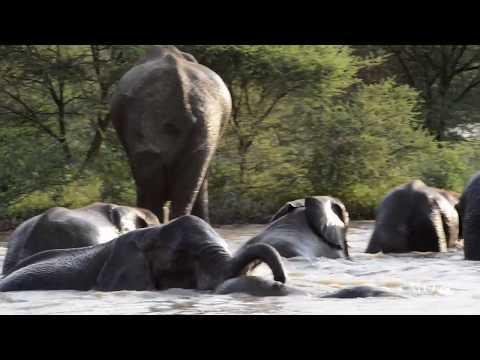 Swimming elephants at Marataba Safari Lodge