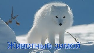 Животные зимой на снегу