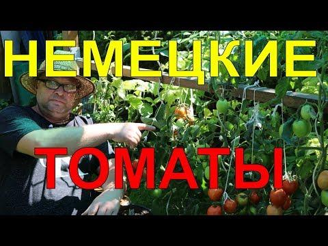 Томаты.Немецкие томаты.Помидоры.Огород.
