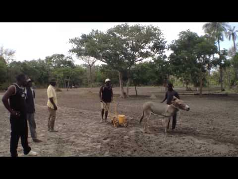 Jobs around a rice field in Casamance  Senegal