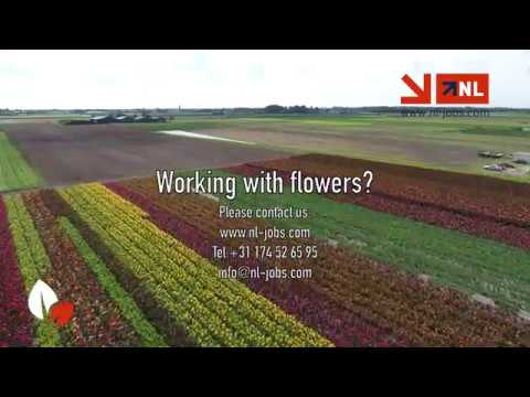 Working in Holland with flowers, NL Jobs
