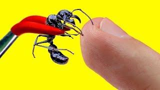 EXPERIMENT - Killer Ameise gegen meinen Wurstfinger | Jumanji TM