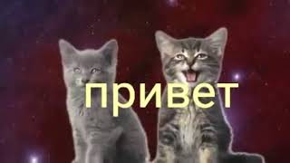 Котята https://media.tenor.co/images/07ccde578c66da42b1b09878a19f1001/tenor.gif 🐈