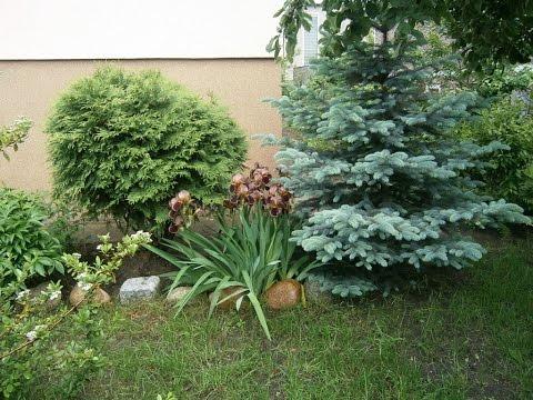 видео: Красивое озеленение двора хвойными растениями